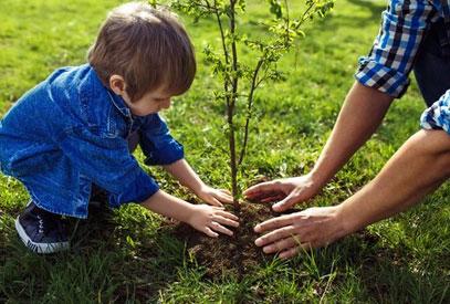 Planter-un-arbre